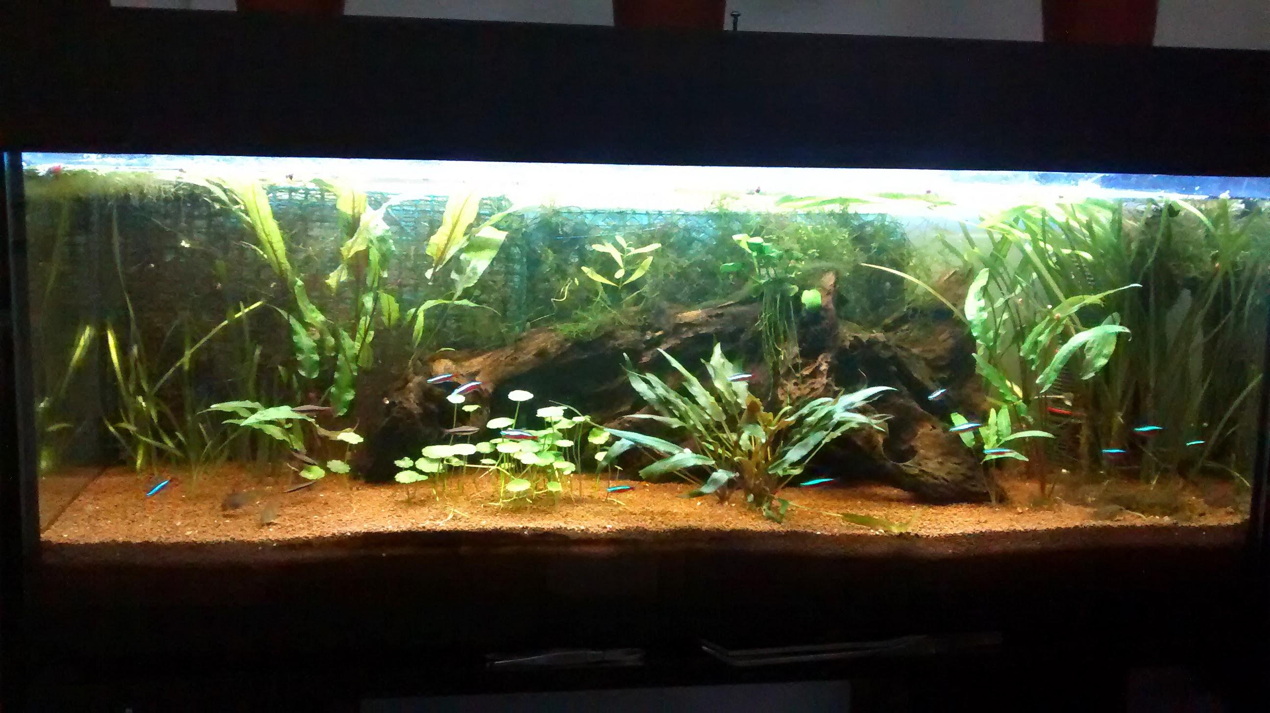 120L02022014 Frais De Aquarium tortue Aquatique Schème